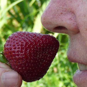l'odeur d'une fraise
